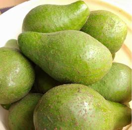 FOTO INSTA 2 Abacate - Guacamole